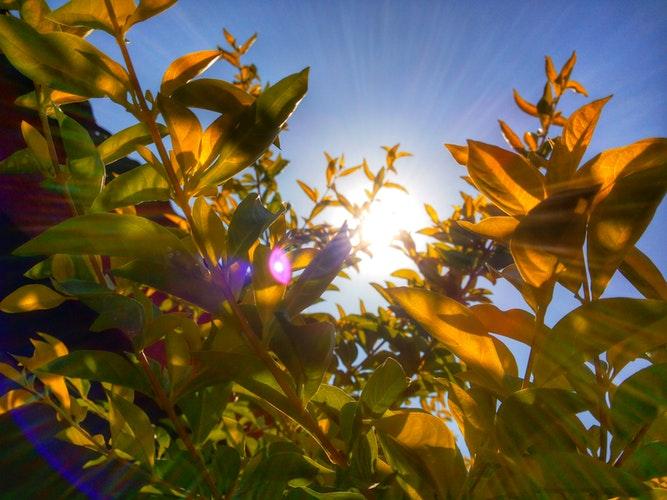 Aumento de Vitamina D – Capsulas solares - Blog - Farmacia Sarasketa